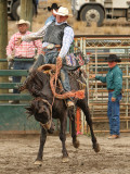 Saddle Bronc IV