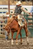 Saddle Bronc V
