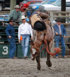 Saddle Bronc Competition