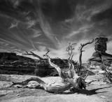 Desert Carcass II