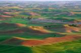Prairie Splendour
