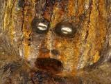 Fetish in the voodoo priest´s temple in Kpalimé.