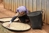 Phnong lady drying her rice. Dak Dam Village, Mondulkiri, Cambodia