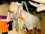 Goat in the Dankhar monastery Spiti