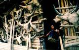 Buffalo and Mithun horns on the wall