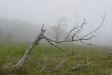 skeleton in the fog