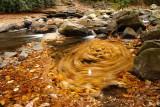 dance of the fallen leaves
