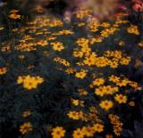 Flowers in film