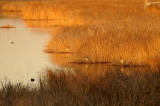 Sunrise Herons