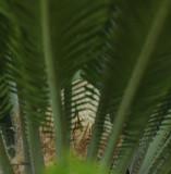 Emerging Palm Tree Flower
