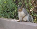 The Backyard Squirrel
