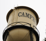 Peregrine Falcon on the Campbell Water Tower