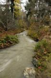 Rushing Stevens Creek