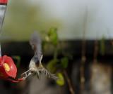 A Leap Day Shot