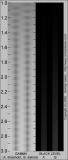 Gamma Estimating