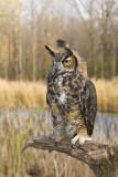 10-25-08 Owl  207.jpg