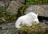 Wildlife photos by Laurel & Scott Tallada