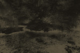 Darkwater Tree