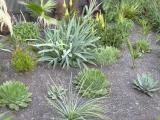 New planting2.JPG