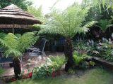 Dicks Garden in Thanet (UK)