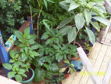 a few pots 2006