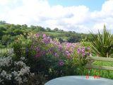 Mark Fawcett's garden in NE Wales