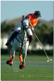 Polo In Wellington Florida Feb-March 2006