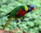 bird1web.jpg