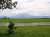 Sawah & gunung - Ujung Berung