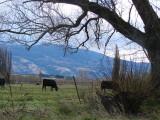 a farmland near Te Ana