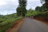 Jalan menyusur kebun teh