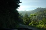 suasana hutan kecil di sepanjang jalan