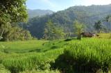 sawah di Cisewu, Garut, Jabar