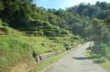 sawah berundak2 spt di Bali