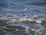 Skimming the Surf _1063062.jpg