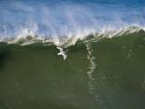 Surf Bird _1224522.jpg