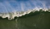Surf Bird _1224523.jpg