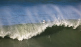Surf Bird _1224524.jpg