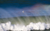 Surf Bird _1224525.jpg