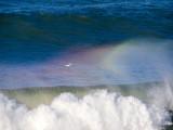 Surf Bird _1224526.jpg