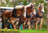 HORSES ON MACKINAC ISLAND, MICHIGAN