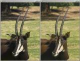 Zoo Composite.jpg