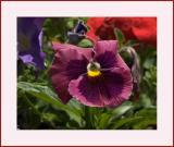 Flower #36 (Test 30D)