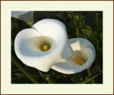 Flower #40