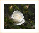 Flower #28b