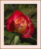 Flower #37