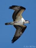 Miscellaneous GA (& SC) birds
