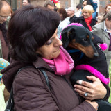 Sausage Dog Parade in Cracow