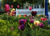 Garden in Egg Harbor, Door County