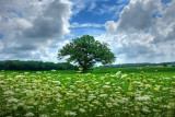 Meadow in Waukesha County off County Rd. ZZ